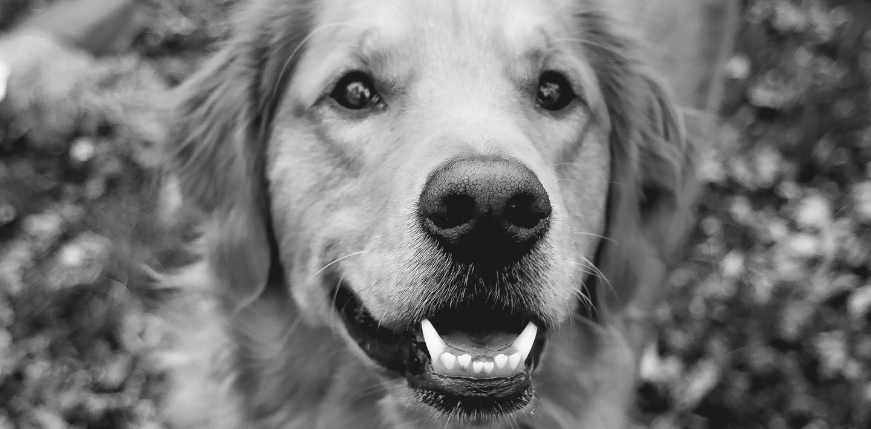 pets-teeth